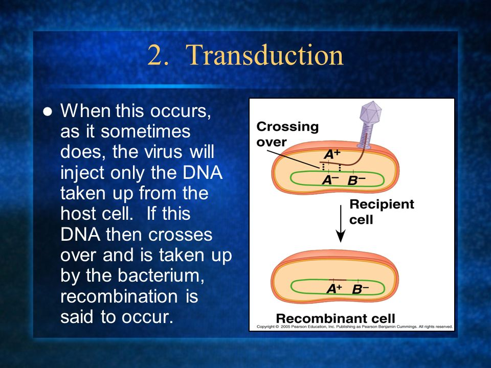 2. Transduction When this occurs, as it sometimes does, the virus will inject only the DNA taken up from the host cell. If this DNA then crosses over