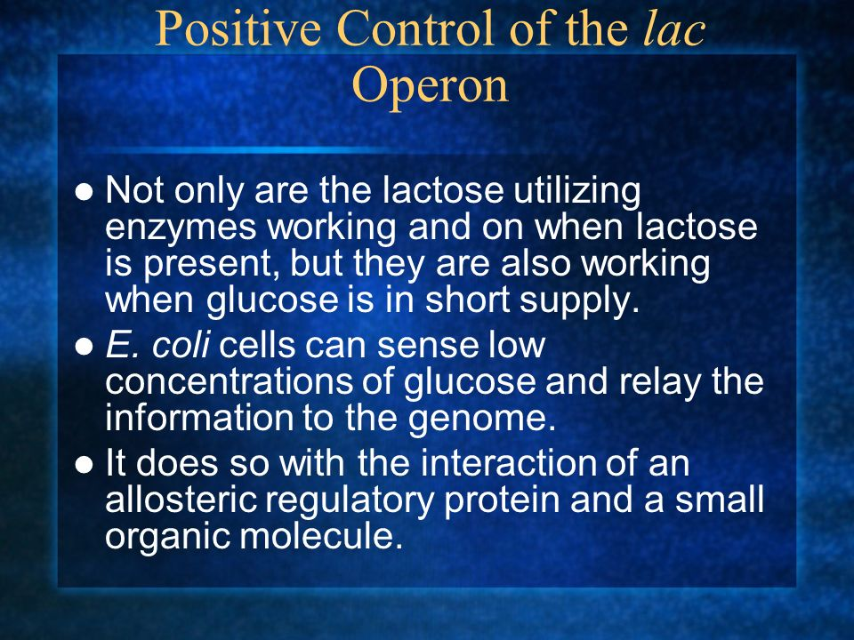 Positive Control of the lac Operon Not only are the lactose utilizing enzymes working and on when lactose is present, but they are also working when g