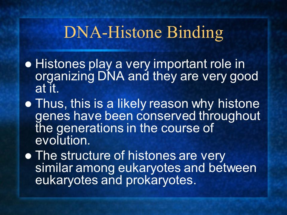 DNA-Histone Binding Histones play a very important role in organizing DNA and they are very good at it. Thus, this is a likely reason why histone gene