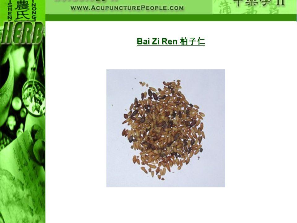Bai Zi Ren Bai Zi Ren