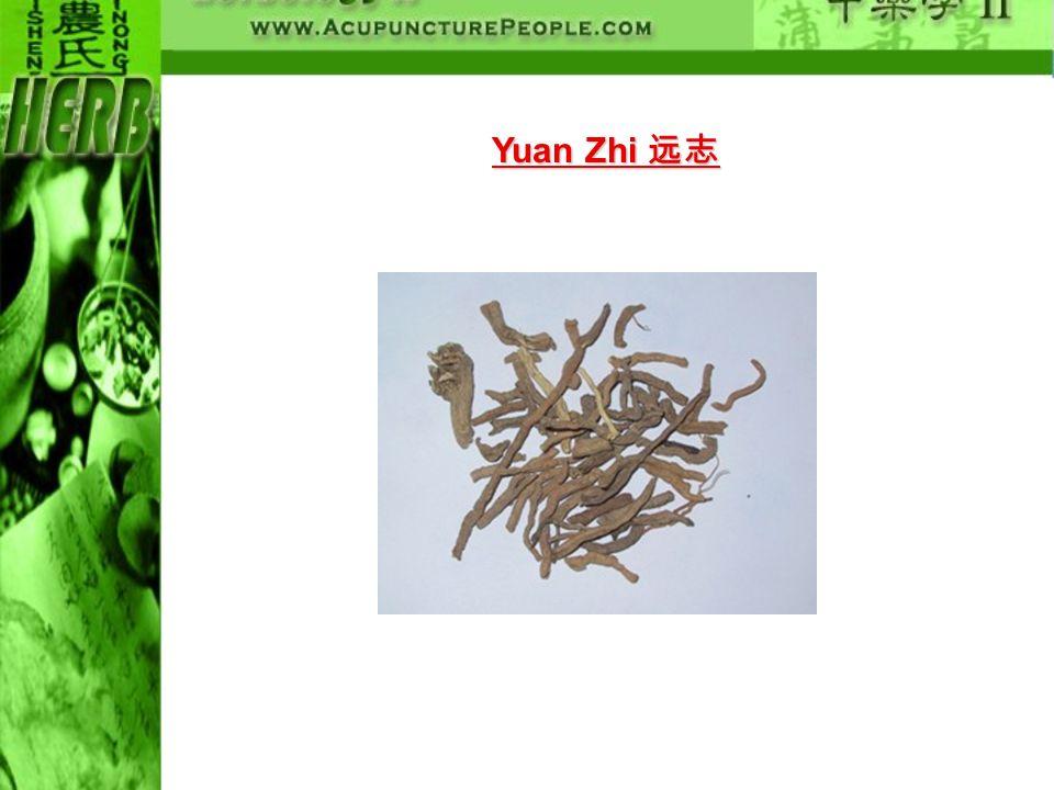 Yuan Zhi Yuan Zhi