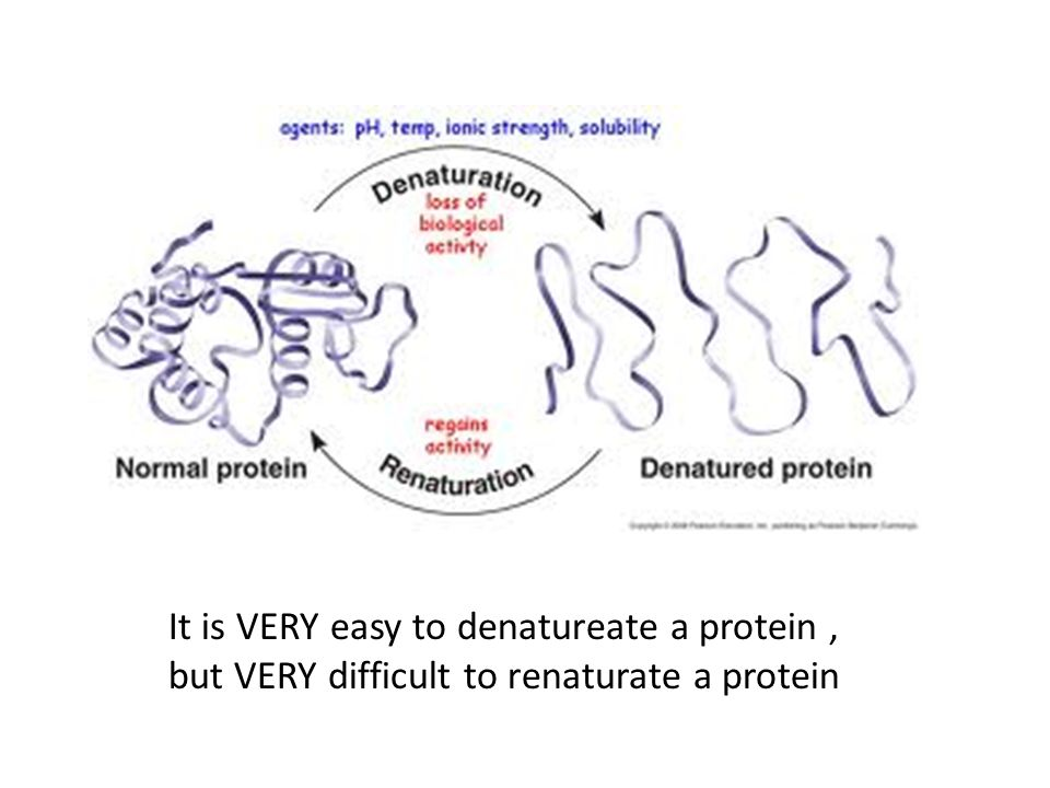 It is VERY easy to denatureate a protein, but VERY difficult to renaturate a protein