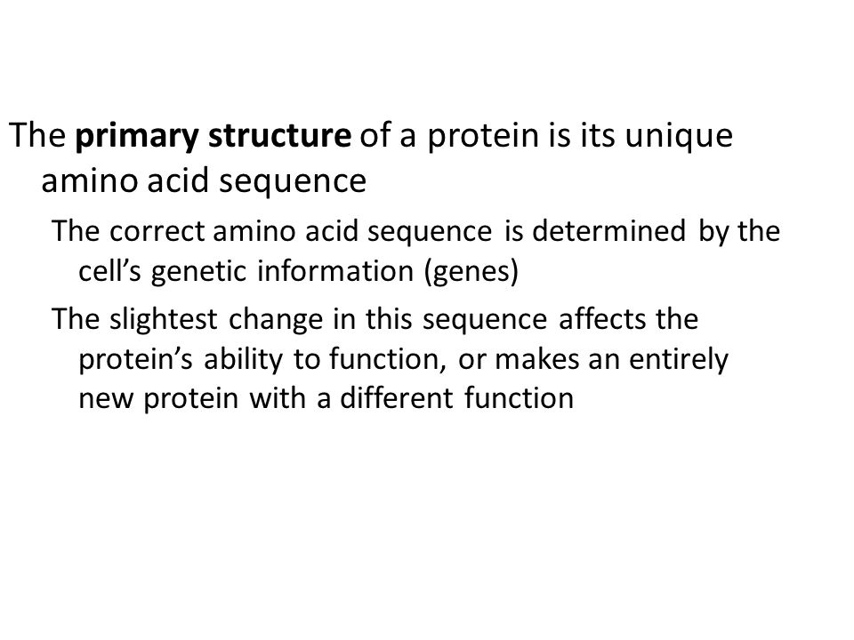 The primary structure of a protein is its unique amino acid sequence The correct amino acid sequence is determined by the cells genetic information (g