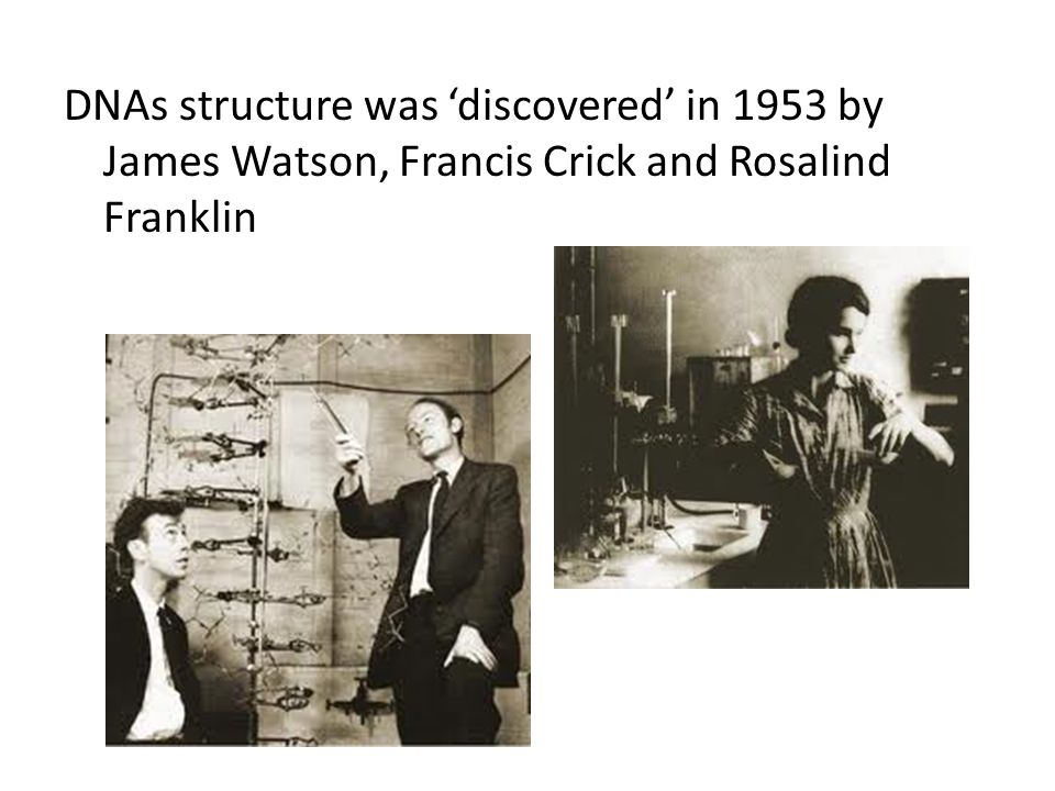 DNAs structure was discovered in 1953 by James Watson, Francis Crick and Rosalind Franklin