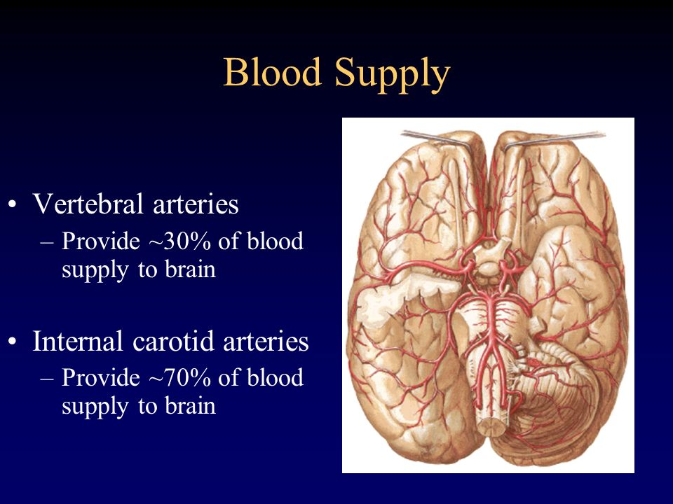 Blood Supply Vertebral arteries –Provide ~30% of blood supply to brain Internal carotid arteries –Provide ~70% of blood supply to brain