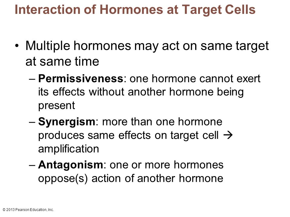 © 2013 Pearson Education, Inc. Interaction of Hormones at Target Cells Multiple hormones may act on same target at same time –Permissiveness: one horm