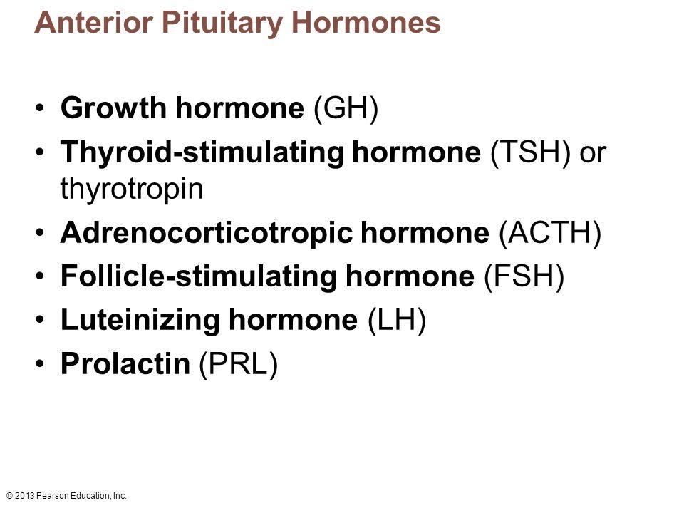 © 2013 Pearson Education, Inc. Anterior Pituitary Hormones Growth hormone (GH) Thyroid-stimulating hormone (TSH) or thyrotropin Adrenocorticotropic ho