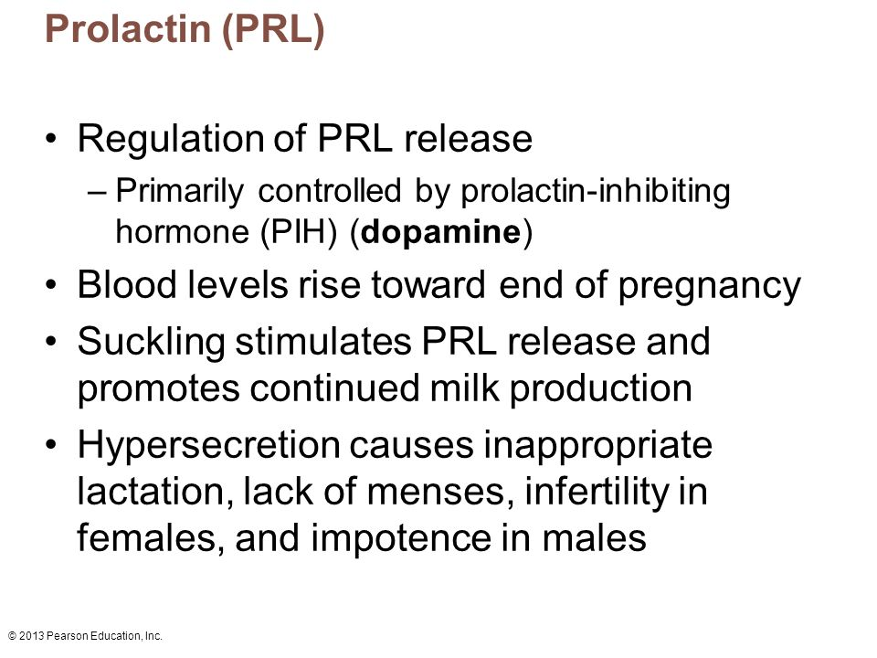 © 2013 Pearson Education, Inc. Prolactin (PRL) Regulation of PRL release –Primarily controlled by prolactin-inhibiting hormone (PIH) (dopamine) Blood
