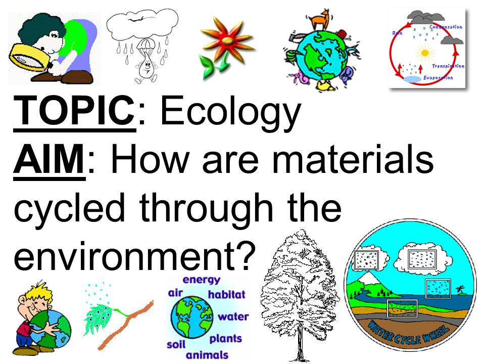 TOPIC: Ecology AIM: How are materials cycled through the environment?