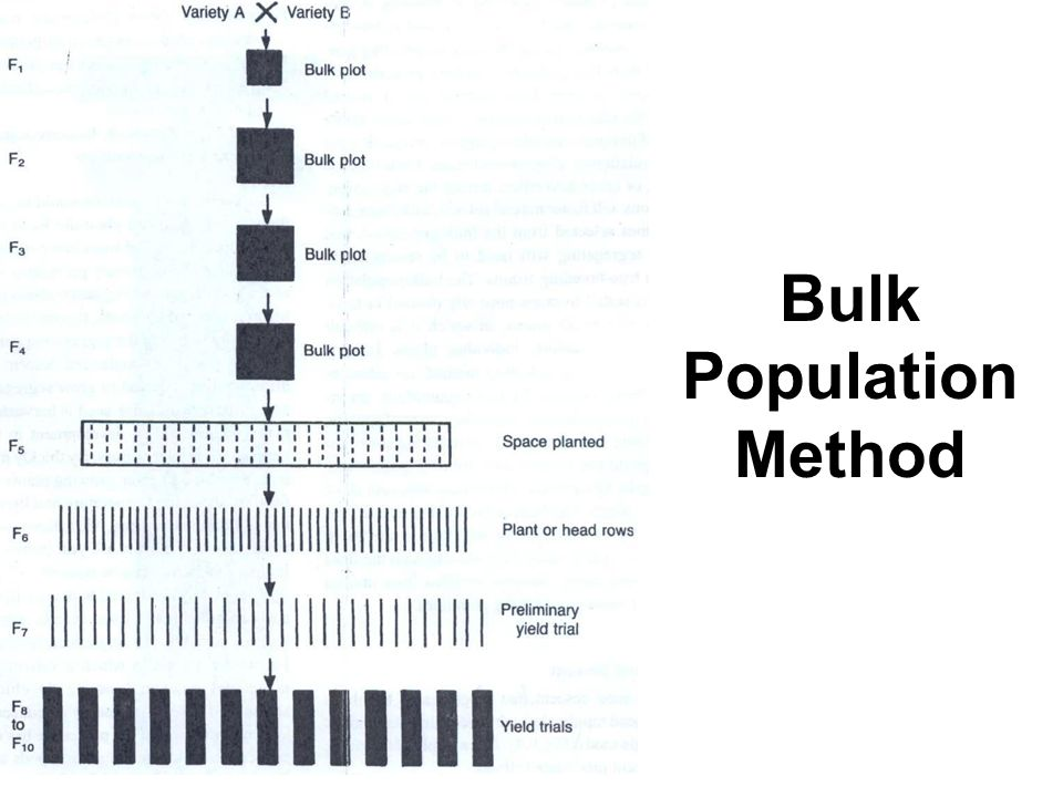 Bulk Population Method