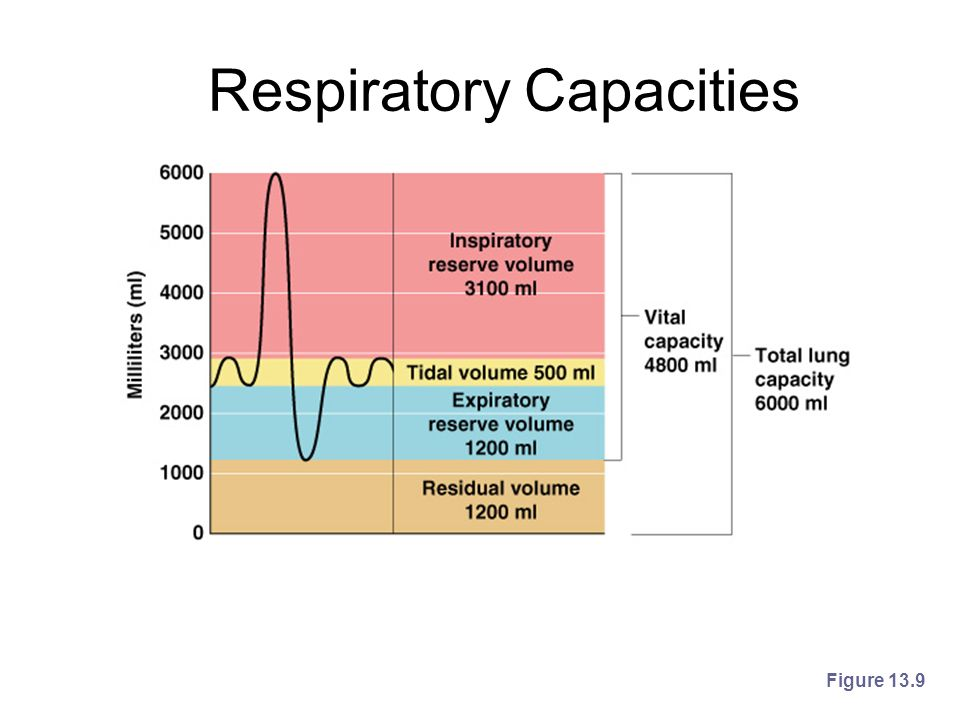 Respiratory Capacities Figure 13.9