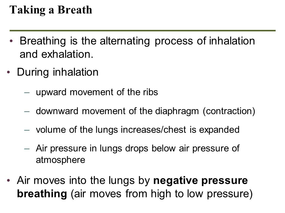Taking a Breath Breathing is the alternating process of inhalation and exhalation. During inhalation –upward movement of the ribs –downward movement o