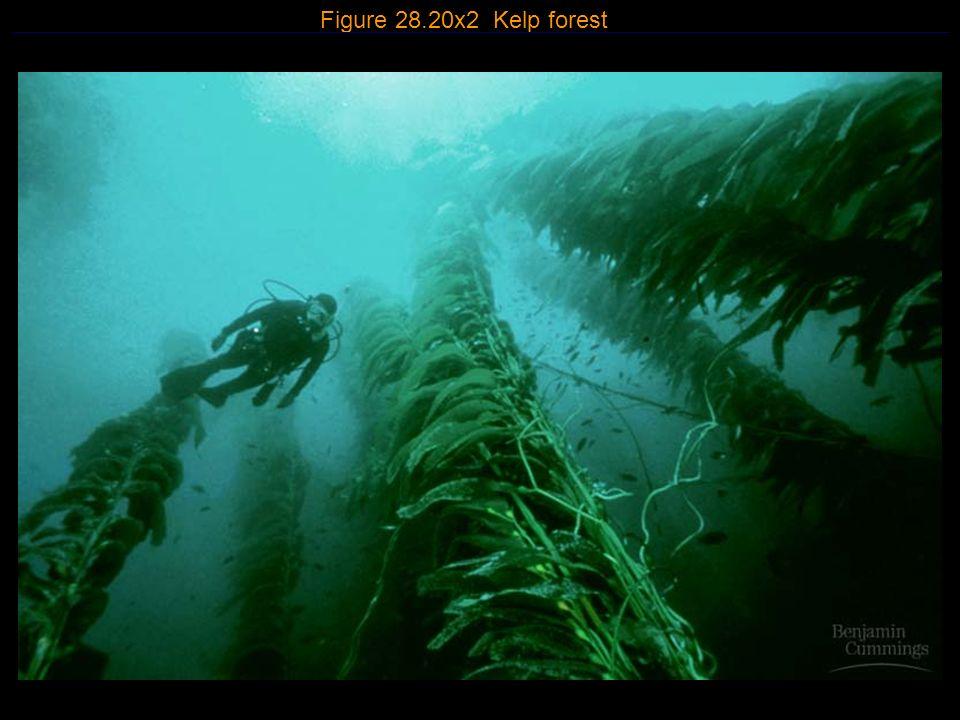 3 Figure 28.20x2 Kelp forest