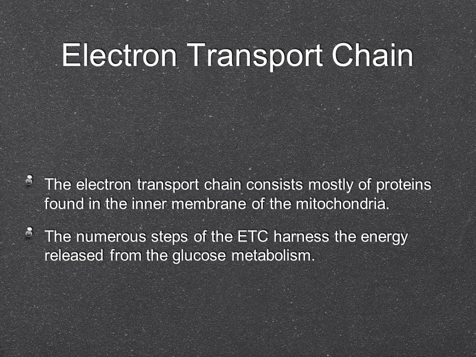 Electron Transport Chain The electron transport chain consists mostly of proteins found in the inner membrane of the mitochondria. The numerous steps