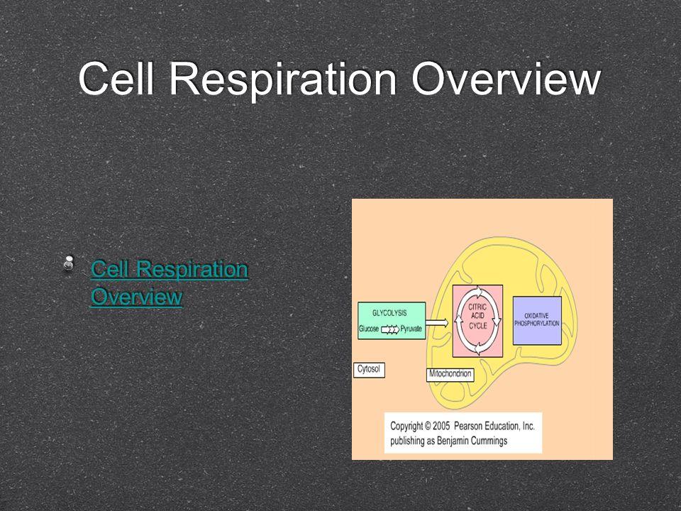 Cell Respiration Overview Cell Respiration Overview Cell Respiration Overview