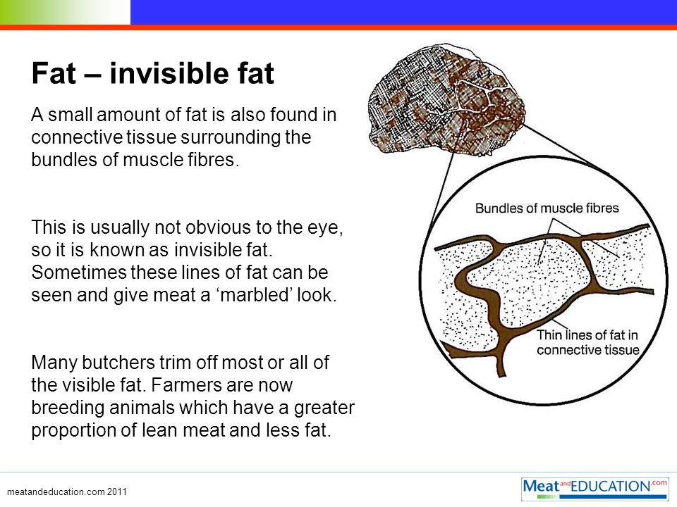 meatandeducation.com 2011 Fat – invisible fat A small amount of fat is also found in connective tissue surrounding the bundles of muscle fibres.