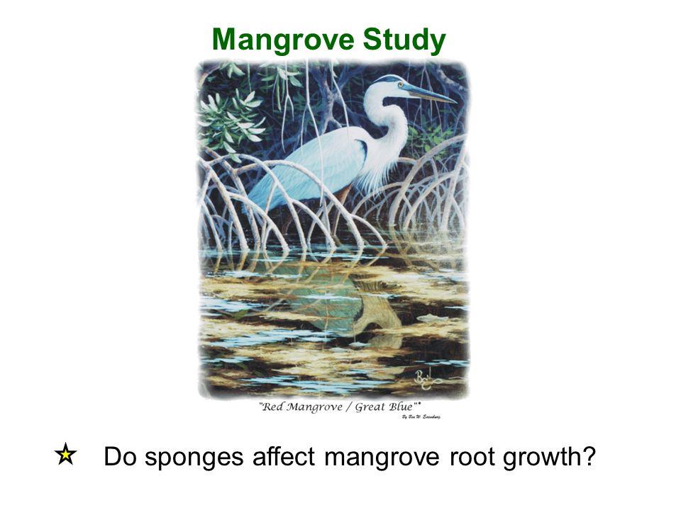 Mangrove Study Do sponges affect mangrove root growth?