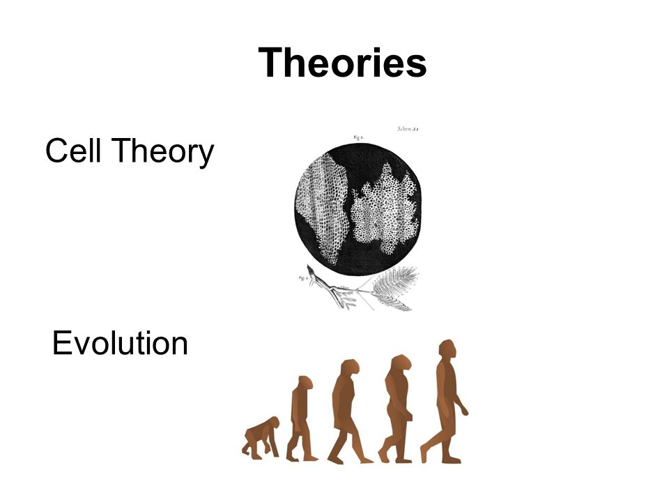 Theories Evolution Cell Theory