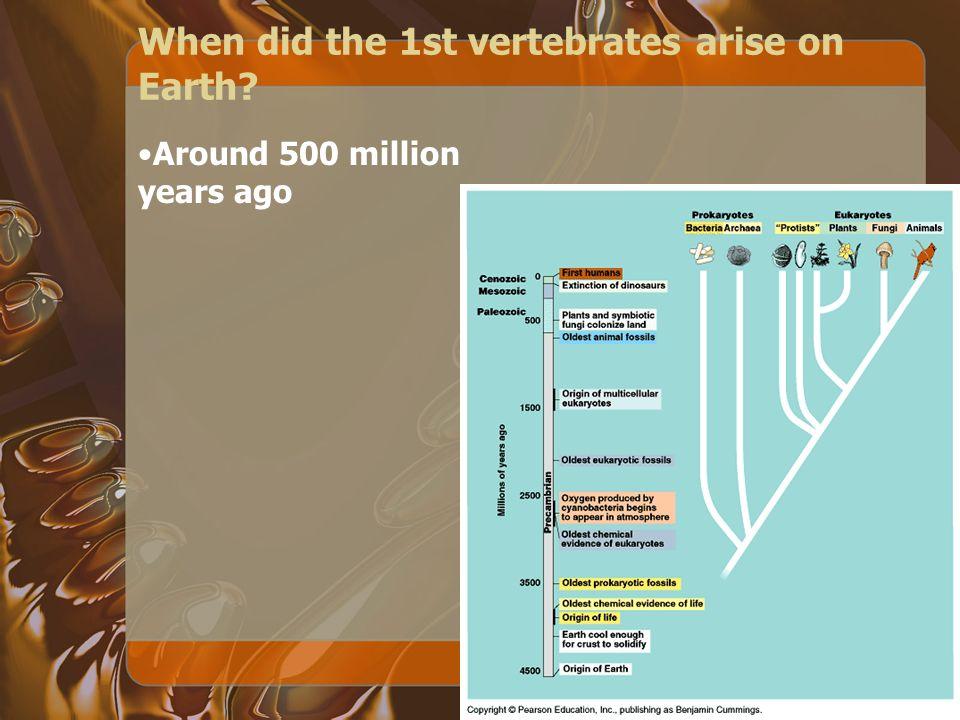 When did the 1st vertebrates arise on Earth? Around 500 million years ago