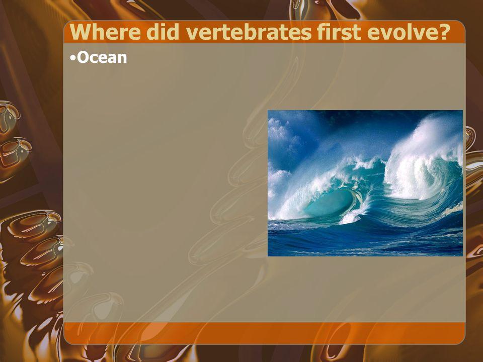 Where did vertebrates first evolve? Ocean