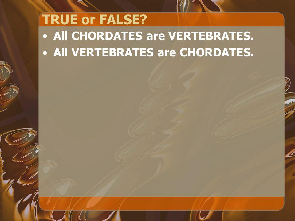 TRUE or FALSE? All CHORDATES are VERTEBRATES. All VERTEBRATES are CHORDATES.