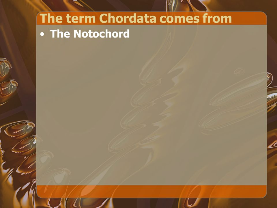 The term Chordata comes from The Notochord