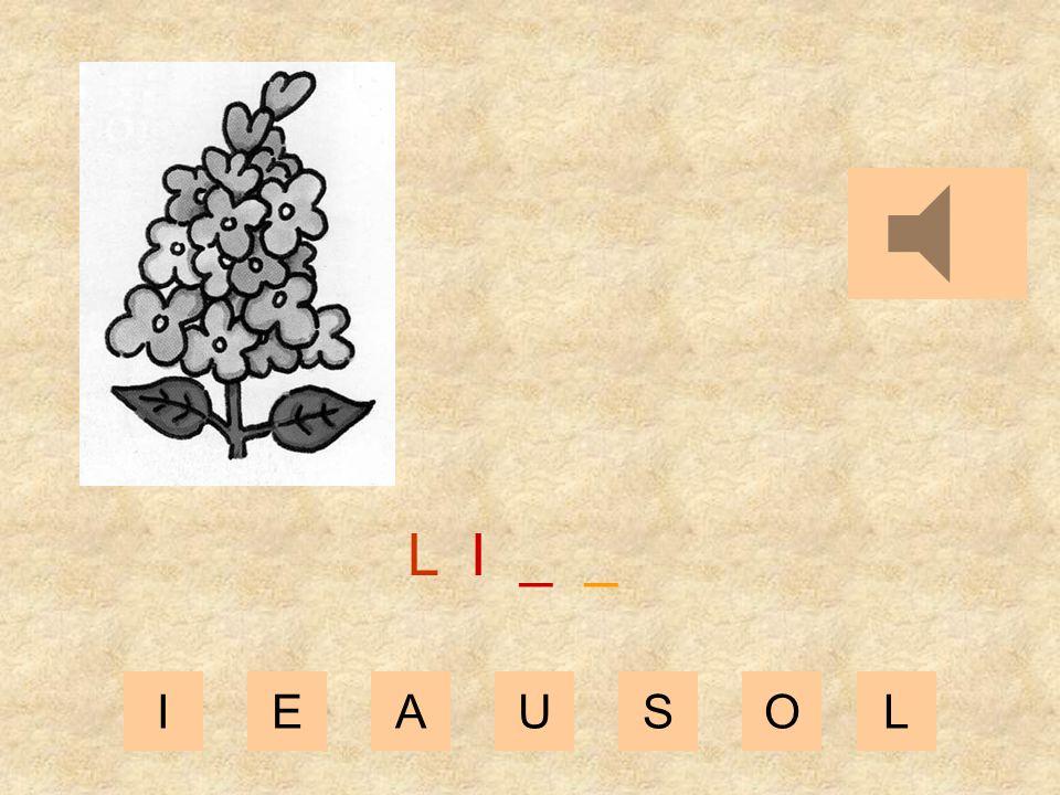 IEAUSOL L _ _ _