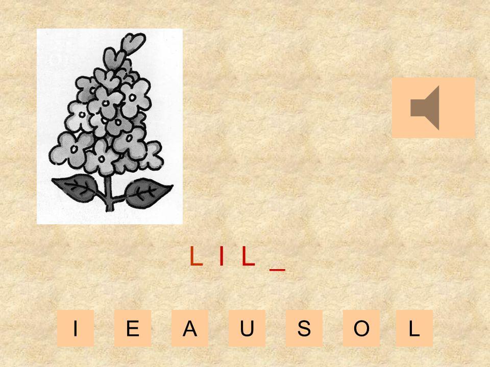 IEAUSOL L I _ _
