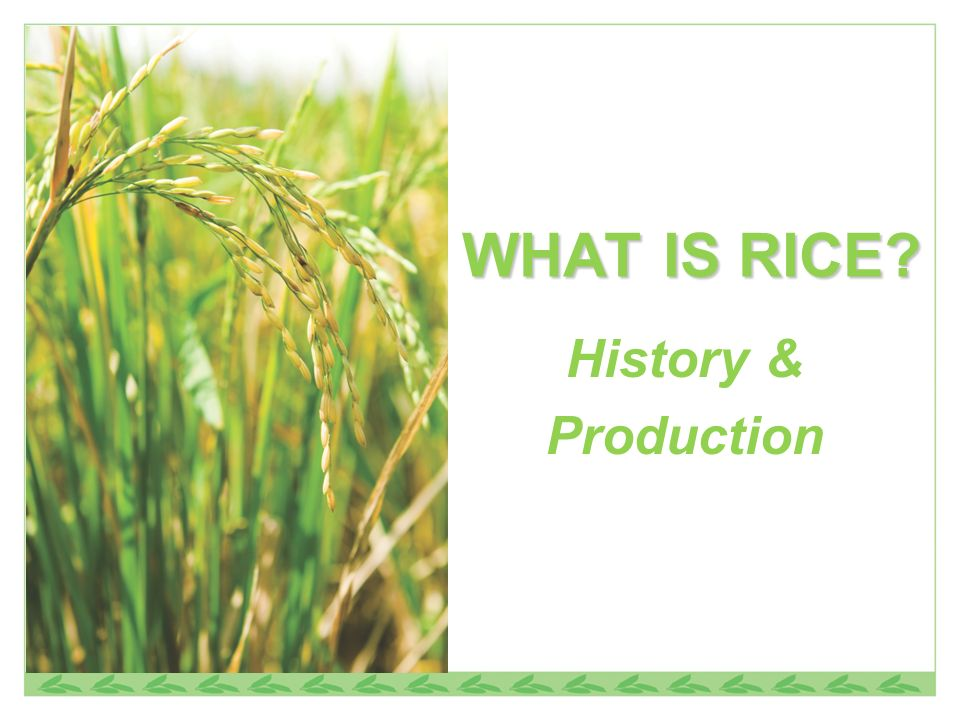 WHAT IS RICE? History & Production
