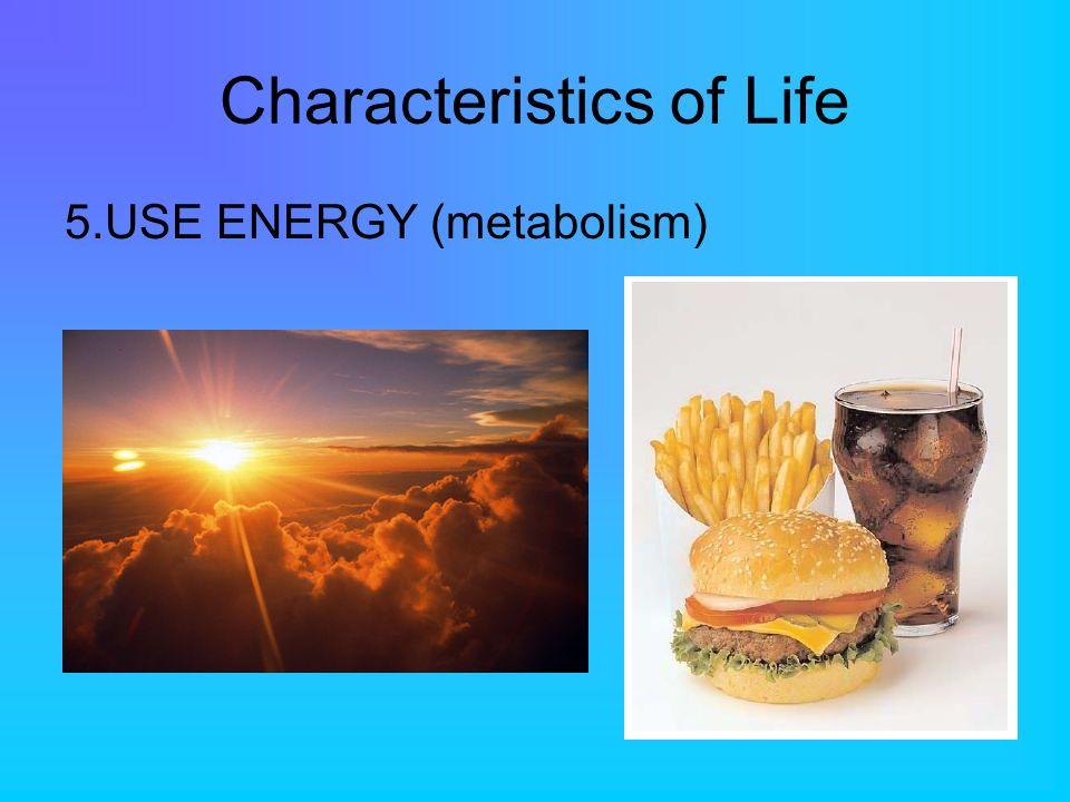 Characteristics of Life 5.USE ENERGY (metabolism)