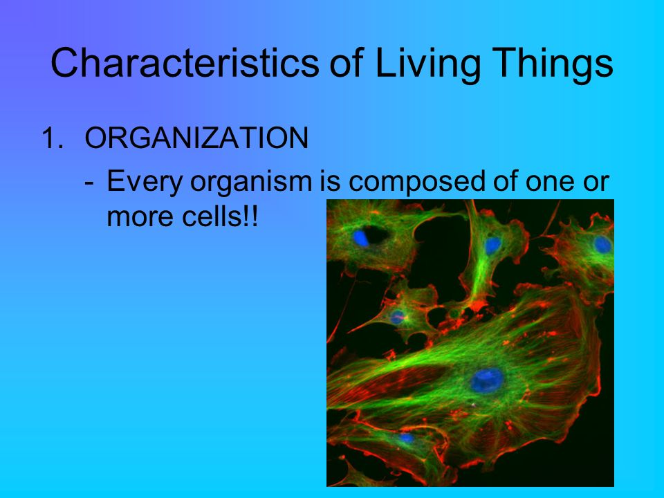 Characteristics of Living Things 1.ORGANIZATION -Every organism is composed of one or more cells!!