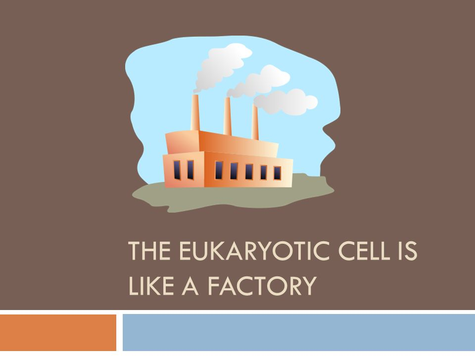 THE EUKARYOTIC CELL IS LIKE A FACTORY