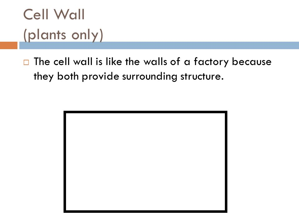 Cell Wall (plants only) The cell wall is like the walls of a factory because they both provide surrounding structure.
