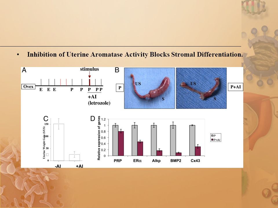 Inhibition of Uterine Aromatase Activity Blocks Stromal Differentiation.