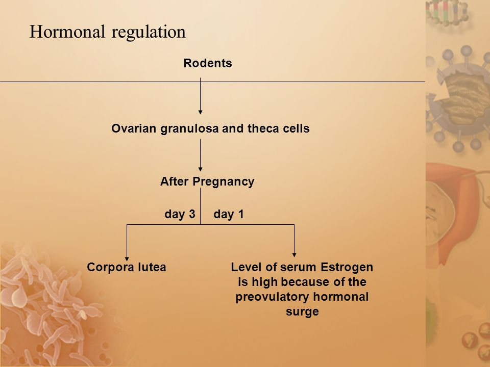 Hormonal regulation day 1 Corpora lutea day 3 Level of serum Estrogen is high because of the preovulatory hormonal surge Rodents Ovarian granulosa and theca cells After Pregnancy