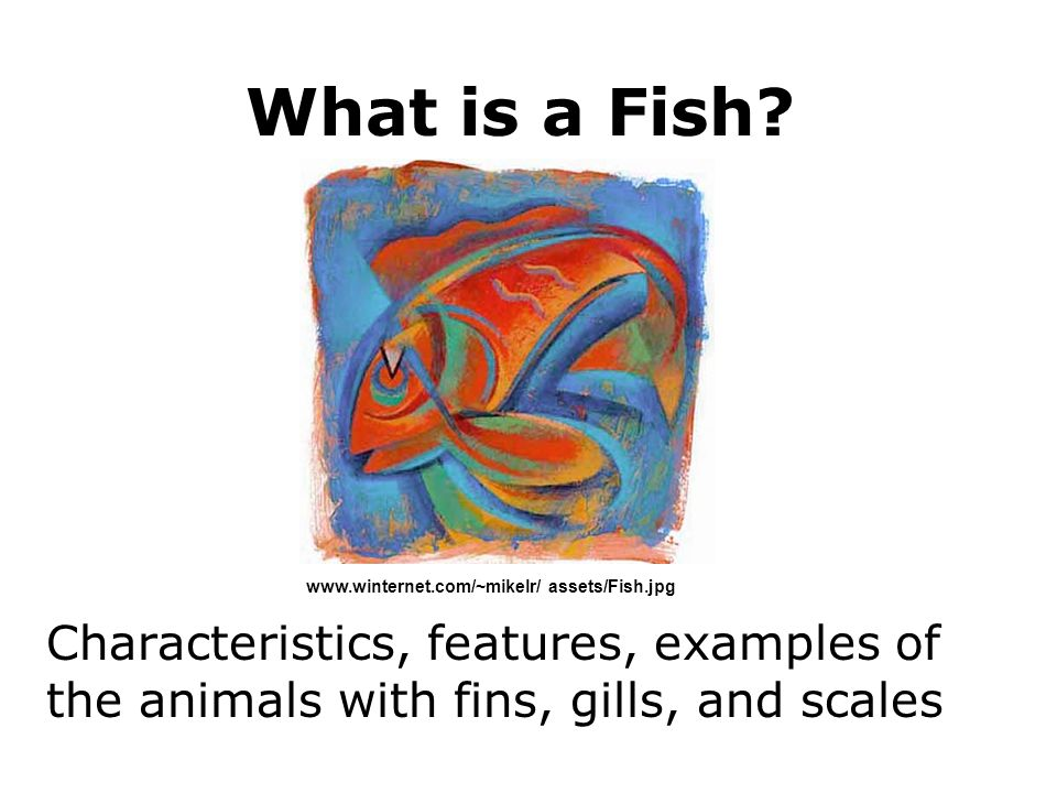 What is a Fish? Characteristics, features, examples of the animals with fins, gills, and scales www.winternet.com/~mikelr/ assets/Fish.jpg