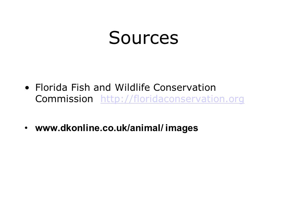 Sources Florida Fish and Wildlife Conservation Commission http://floridaconservation.org http://floridaconservation.org www.dkonline.co.uk/animal/ ima