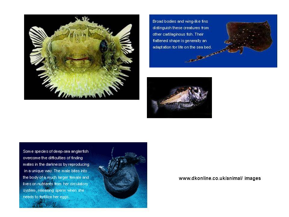 www.dkonline.co.uk/animal/ images