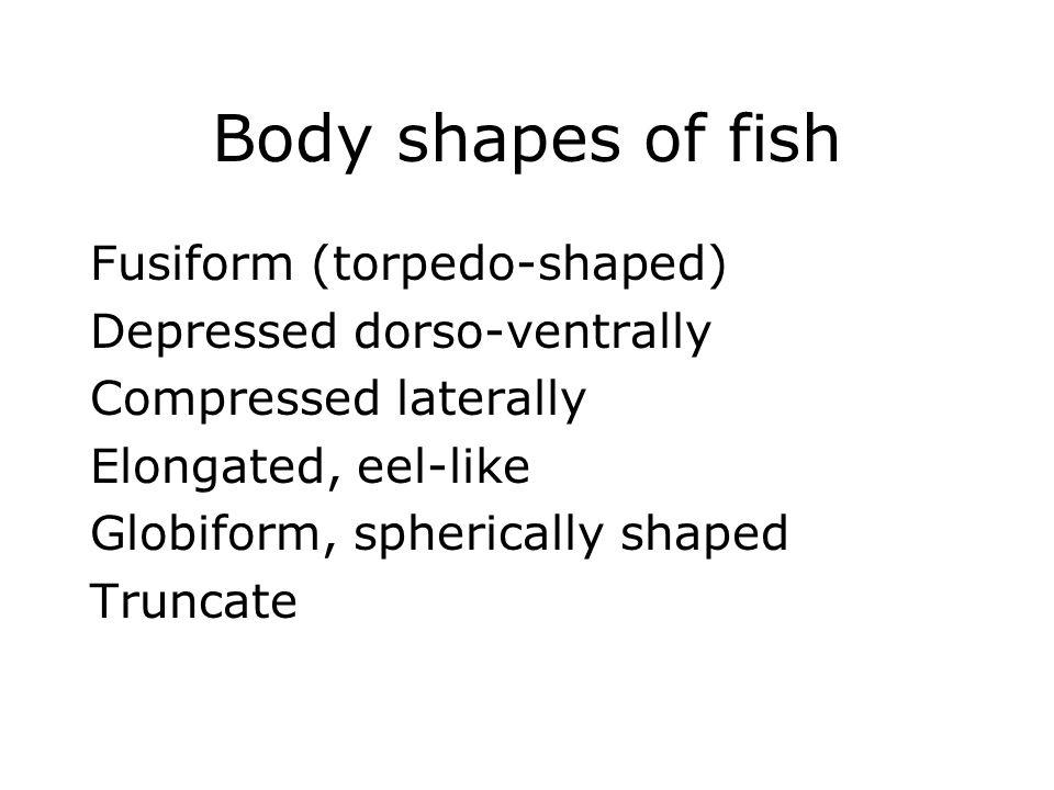 Body shapes of fish Fusiform (torpedo-shaped) Depressed dorso-ventrally Compressed laterally Elongated, eel-like Globiform, spherically shaped Truncat