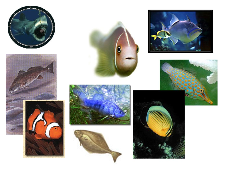 Lantern fish Light producing spots on their bodies that light up the dark surroundings Shiny dots along the lower part of the body make light.