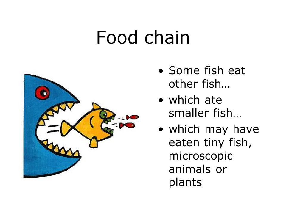Food chain Some fish eat other fish… which ate smaller fish… which may have eaten tiny fish, microscopic animals or plants