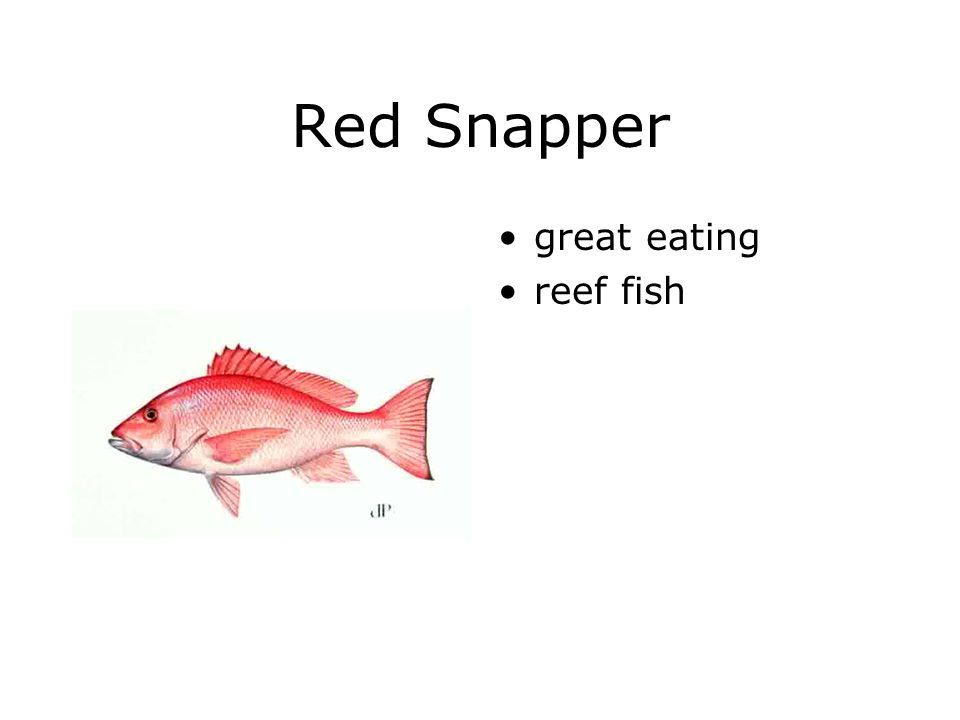 Red Snapper great eating reef fish