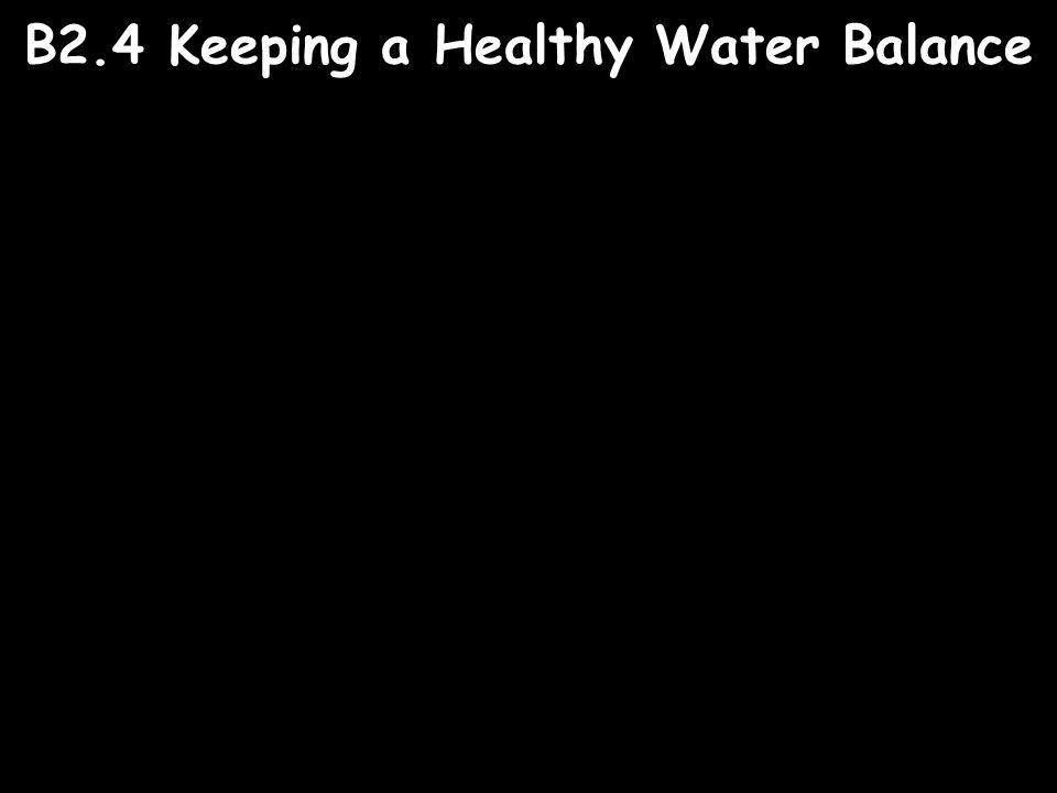 B2.4 Keeping a Healthy Water Balance