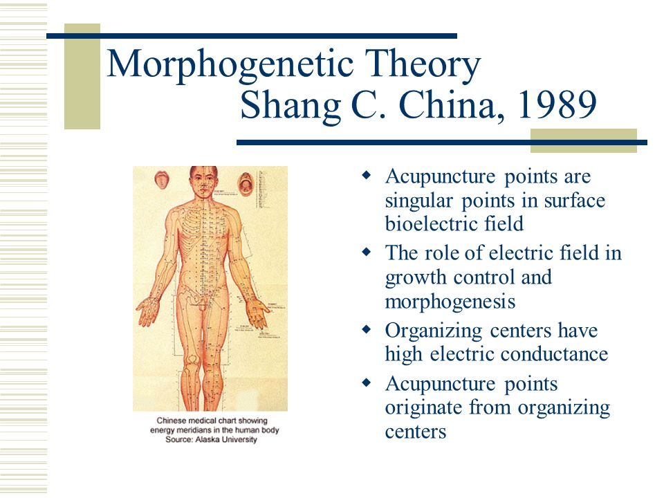 Morphogenetic Theory Shang C. China, 1989 Acupuncture points are singular points in surface bioelectric field The role of electric field in growth con