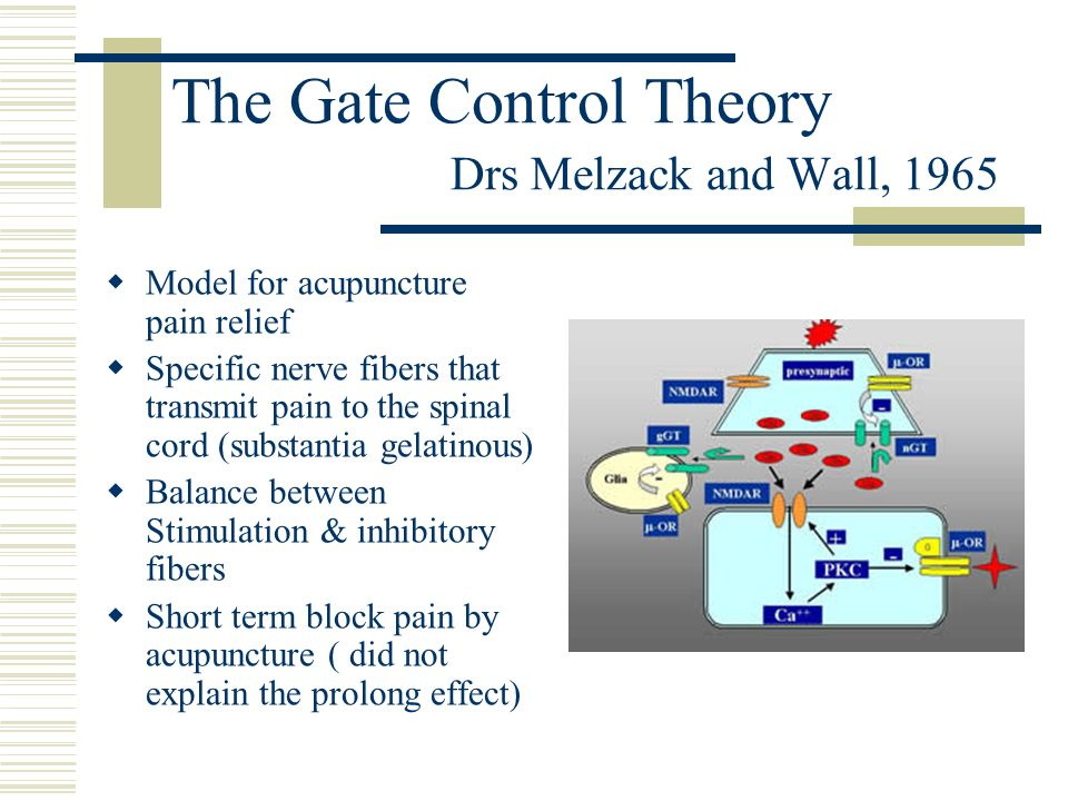 The Gate Control Theory Drs Melzack and Wall, 1965 Model for acupuncture pain relief Specific nerve fibers that transmit pain to the spinal cord (subs