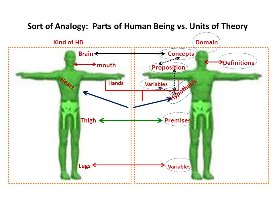 Sort of Analogy: Parts of Human Being vs.