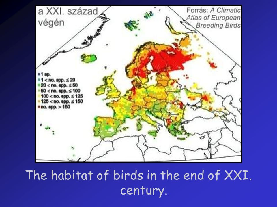 The habitat of birds in the end of XXI. century.