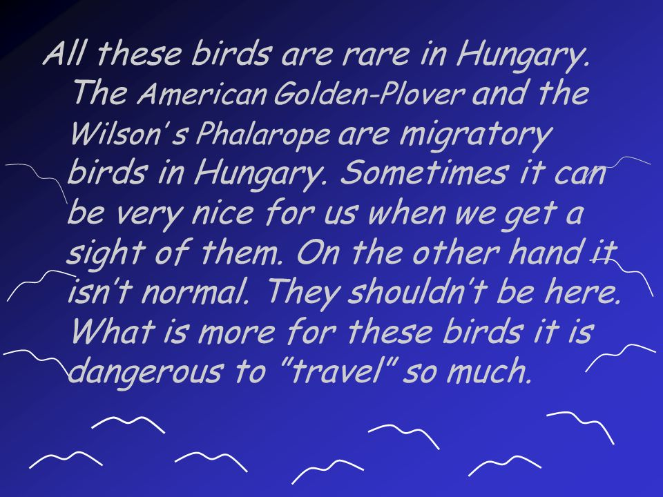 All these birds are rare in Hungary.