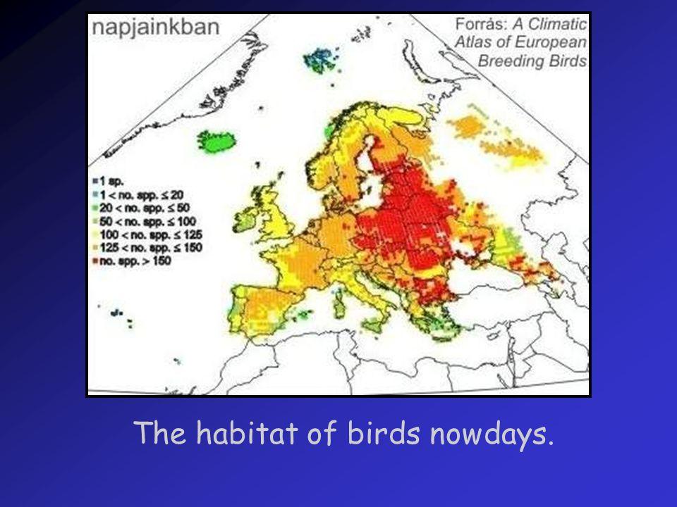 The habitat of birds in the end of XXI. century.