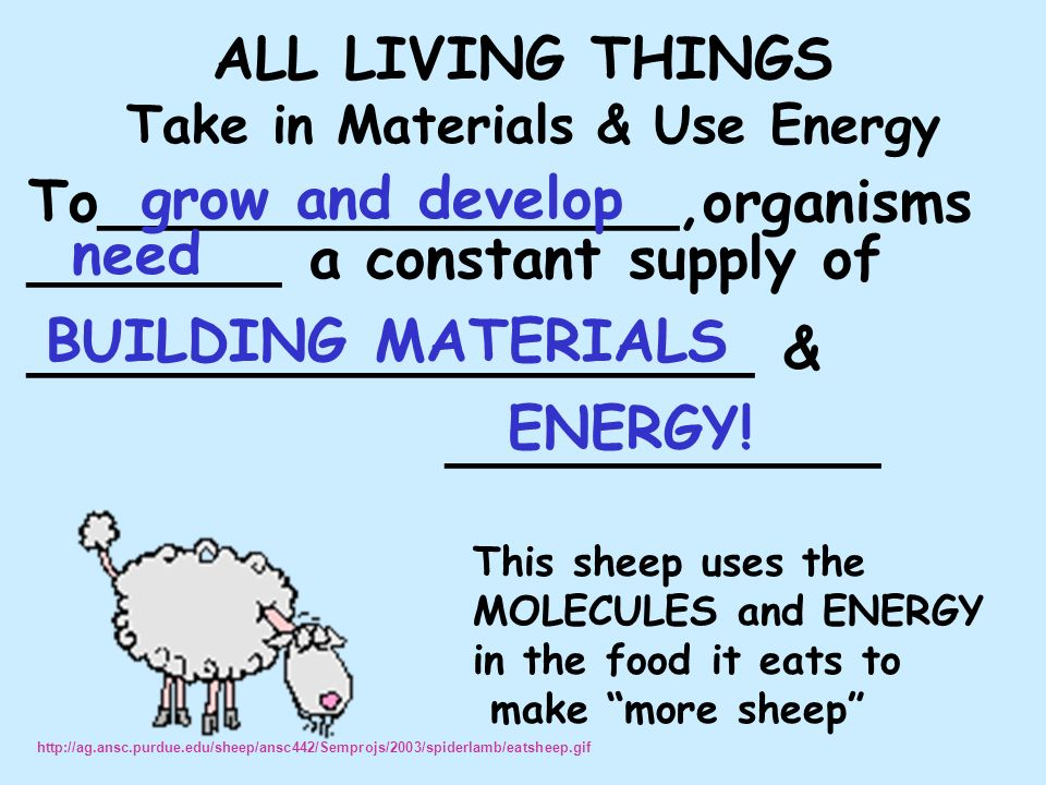 ALL LIVING THINGS Take in Materials & Use Energy To________________,organisms _______ a constant supply of ____________________ & ____________ This sheep uses the MOLECULES and ENERGY in the food it eats to make more sheep grow and develop need BUILDING MATERIALS ENERGY.